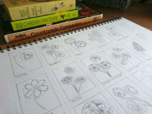 Wildflower sketches by Jo Degenhart