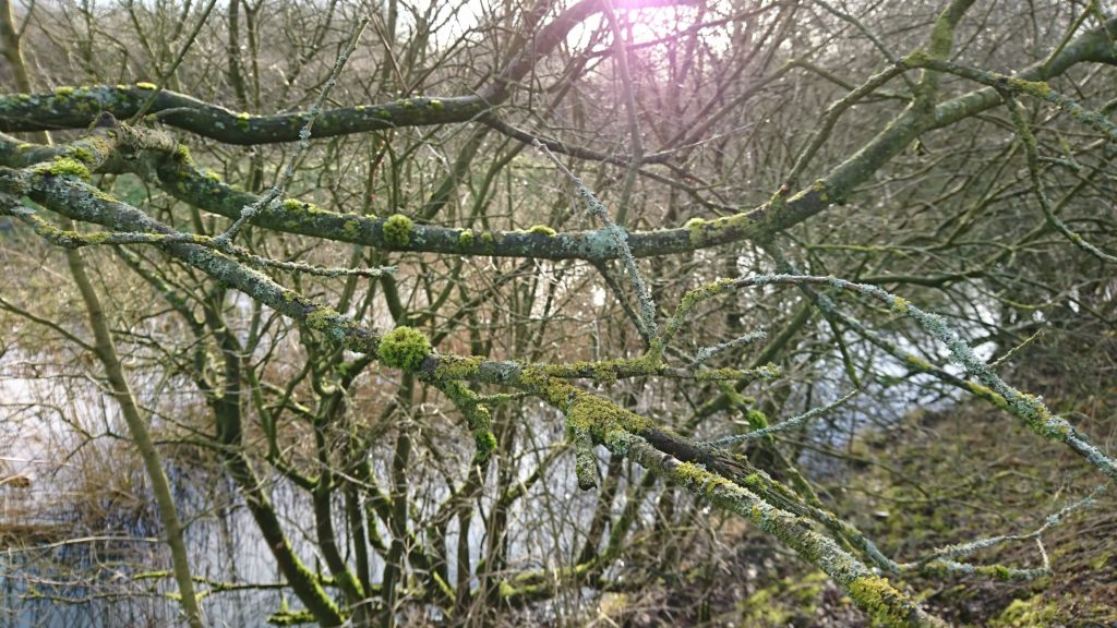 Branches over the Canal